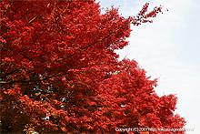 京都東福寺近辺