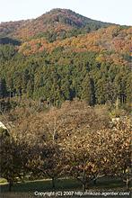 日和田山終紅葉