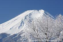 冬富士と冬木立 by α700