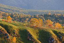 草津 白根山の紅葉