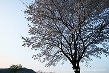 春が来た(2010年)
