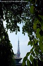 増上寺の木陰からタワーを望む