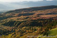 木々照らす斜光〜芳ヶ平の紅葉(2012)