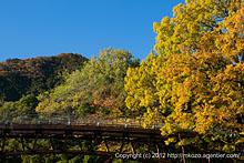 あいあい橋と黄葉(巾着田の秋)