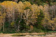 紅葉の景を探しに〜弦ヶ池(2013)