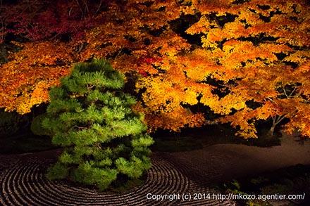 京都の紅葉に思いをはせて