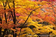 秋色フィナーレ〜常寂光寺の紅葉(2013年)