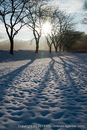 雪面のびやかに〜巾着田の雪景