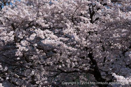 春爛漫に咲く〜春の秩父路へ(2014)